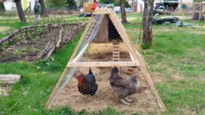 Poulailler triangulaire Gaïwana